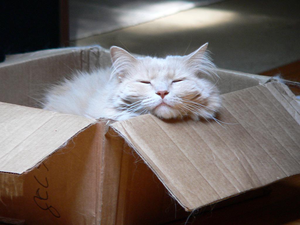 a43 Leo in Box