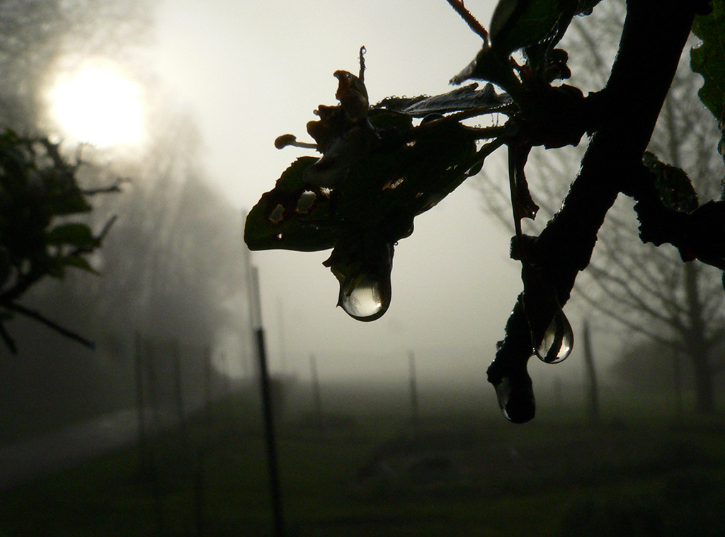 a33 Water Drop Sun Fog