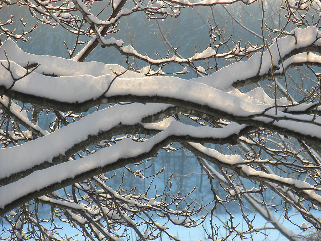a107 Snow Branches