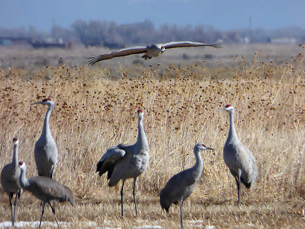 a48 Eight Cranes