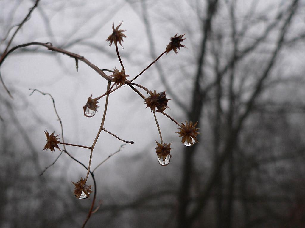a1 Autumn Drops