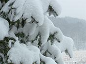 a90 Spruce Snow