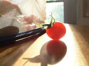 a30 Tomato Backlit