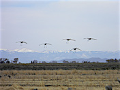 a35 Five Cranes Landing