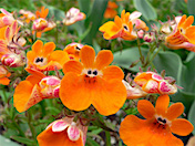 a64 Orange Flowers